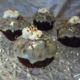Irish coffee cakes - bageopskrift